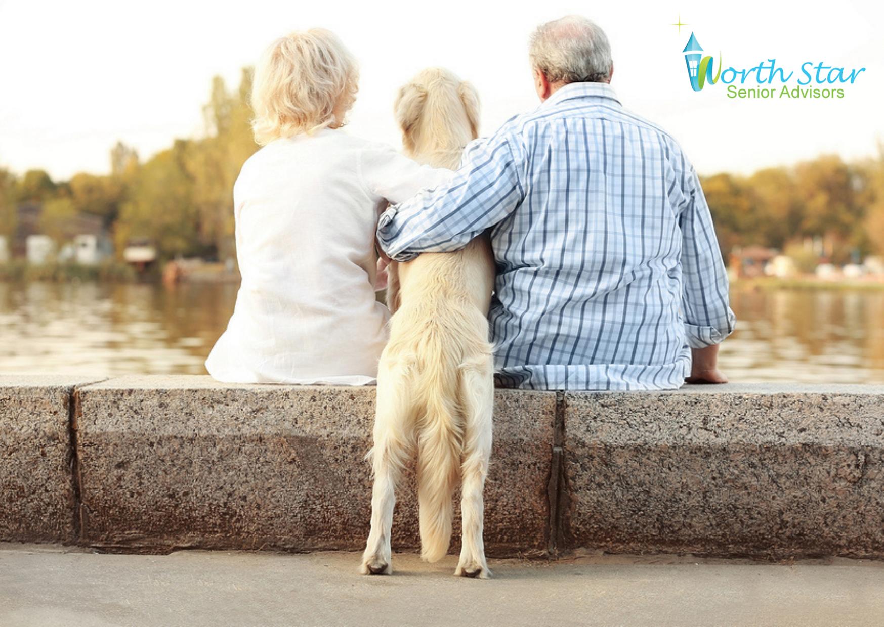 Pet-therapy-north-star-senior-advisors