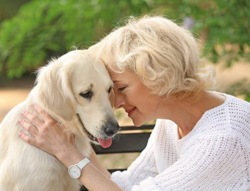 How Pet Therapy Benefits Senior Living in Florida